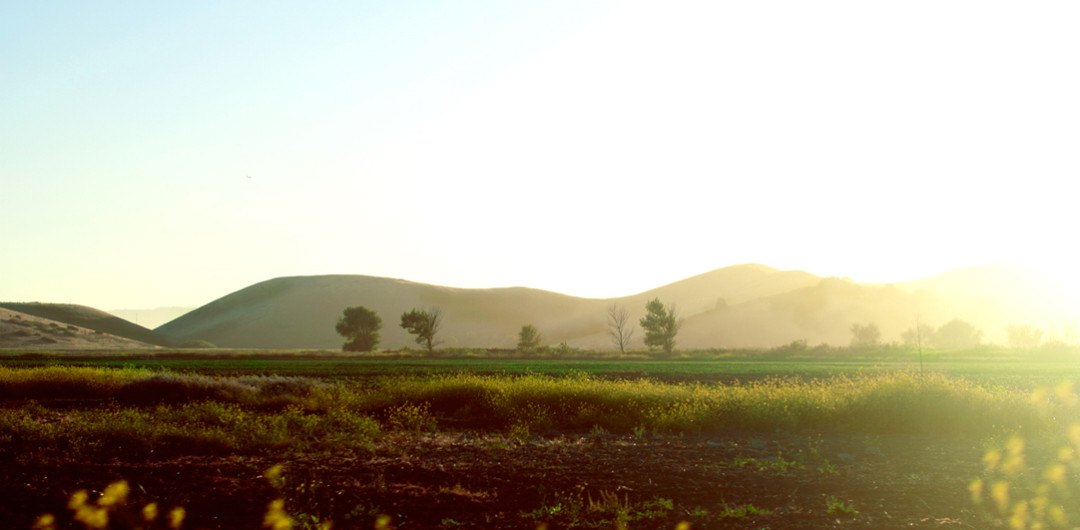 EcoSoul-Landscape